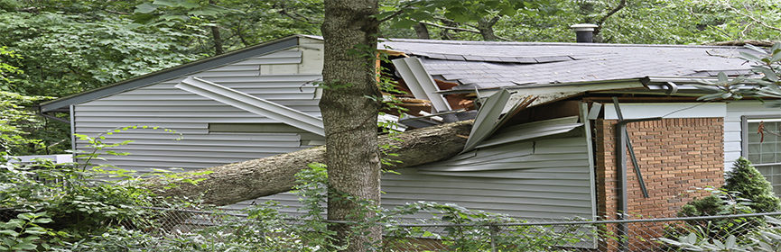 tree-slams-into-house